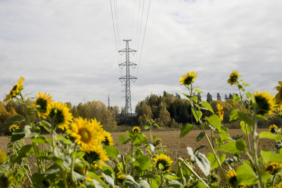 Auringonkukkapelto, sähkölinjoja taustalla maisemassa